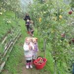 che buone le mele !!!