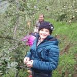 tutti a raccogliere mele