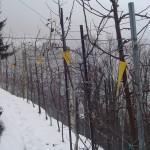 meli sotto la neve