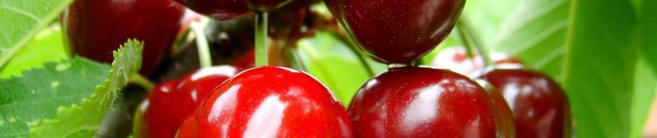 red cherries, fruit, leaves 148626